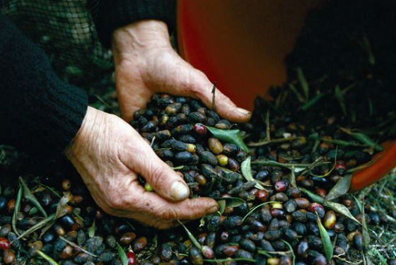 Lady holds olives Made in Crete